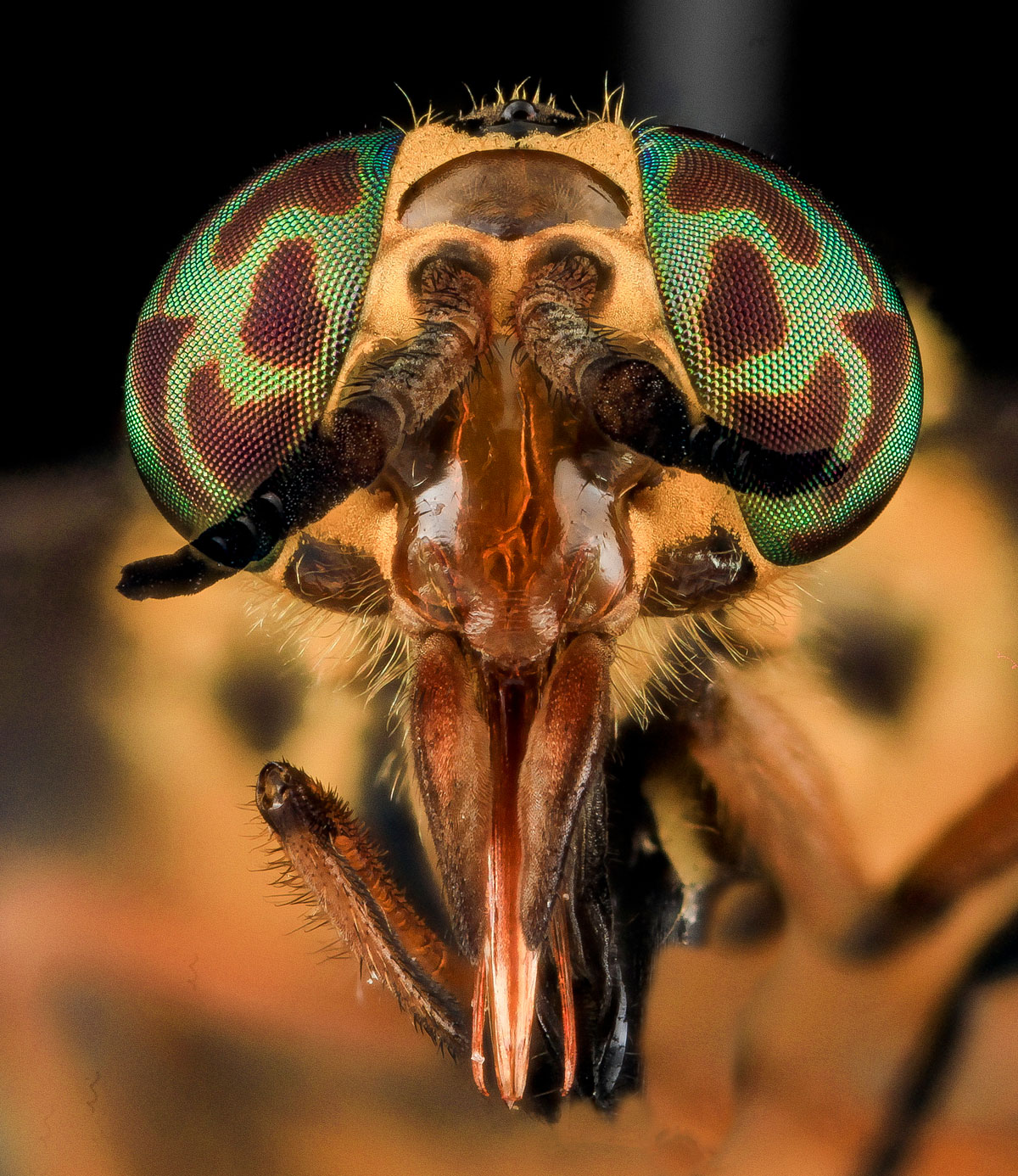 close-ups-of-insect-eyes-by-usgs-biml-4