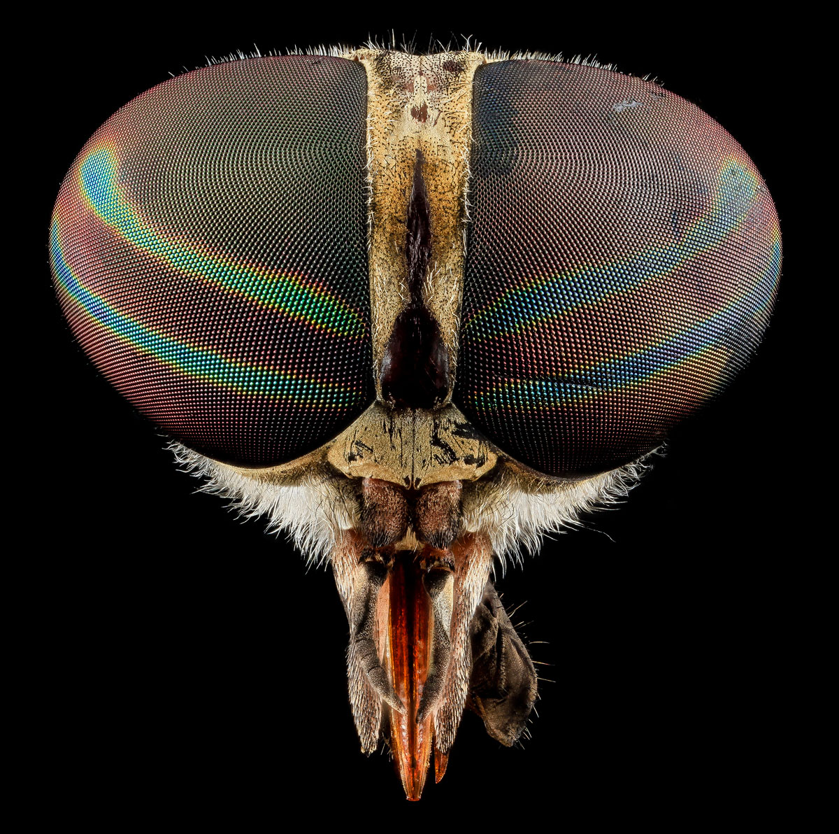 close-ups-of-insect-eyes-by-usgs-biml-6