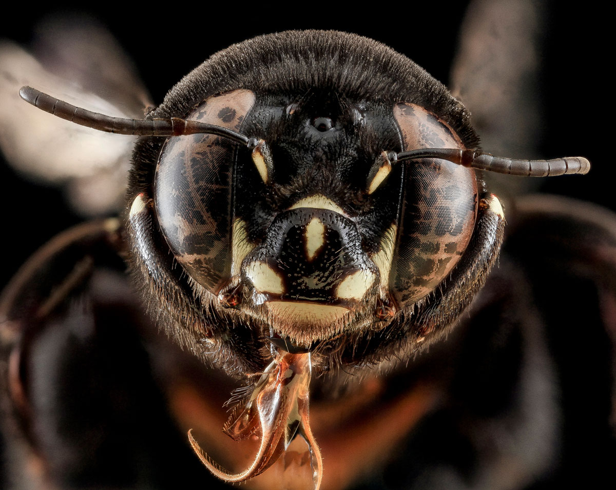 close-ups-of-insect-eyes-by-usgs-biml-7