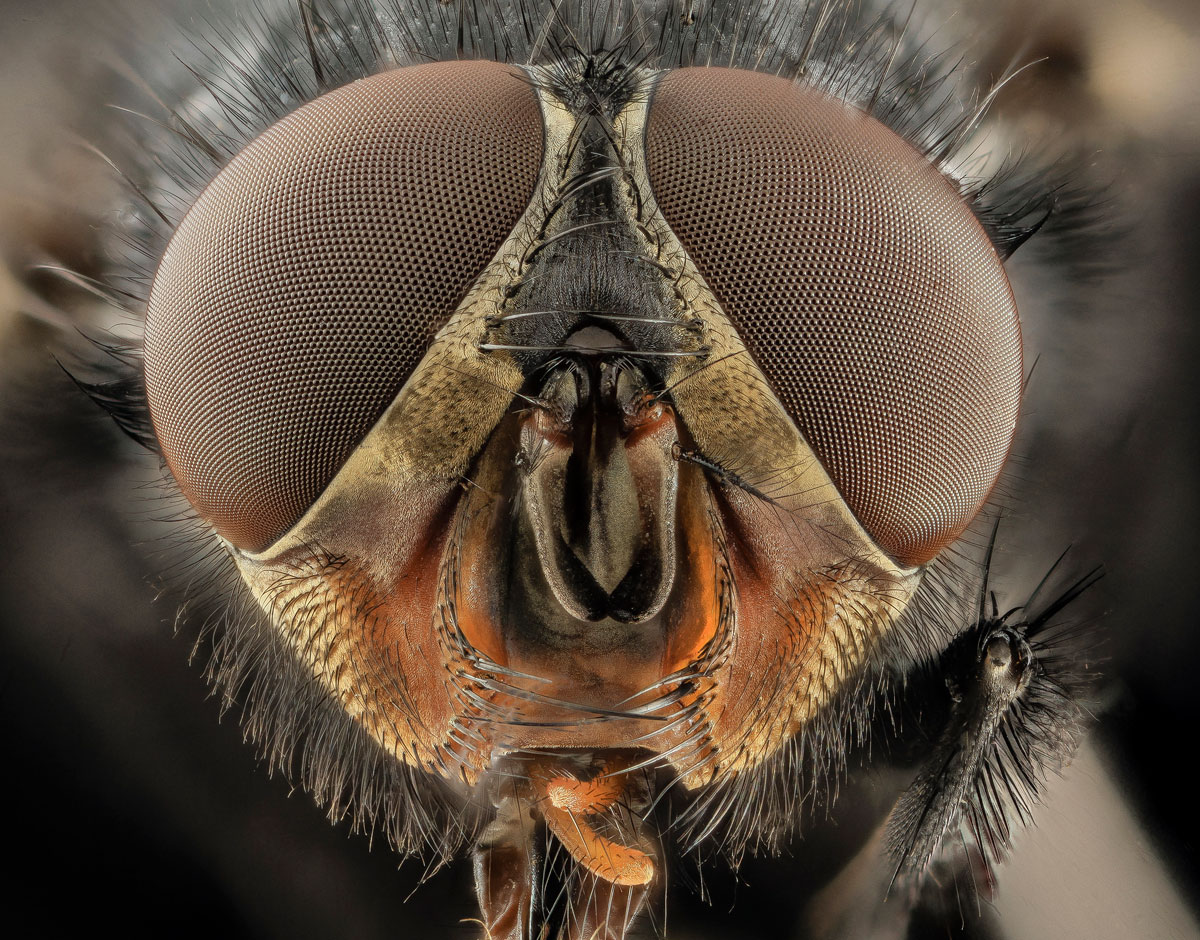 close-ups-of-insect-eyes-by-usgs-biml-9