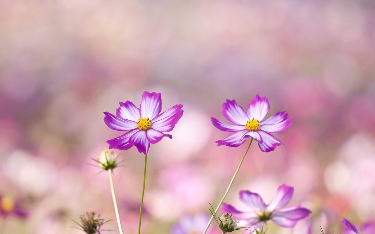 images-of-flowers-free-download-1