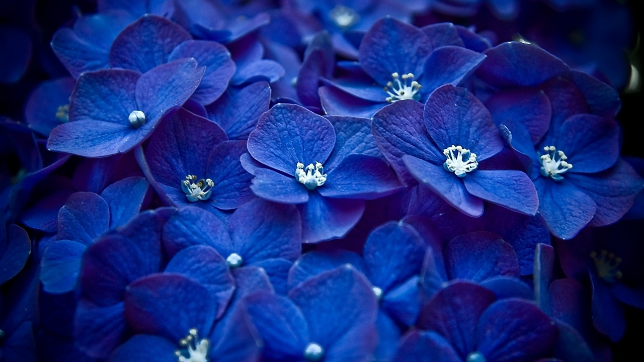 images-of-flowers-free-download-11
