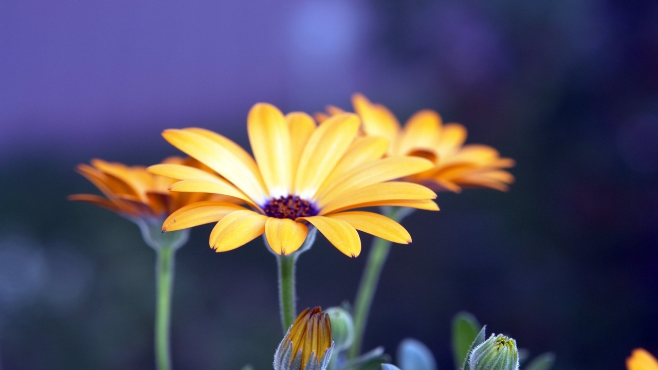 images-of-flowers-free-download-14