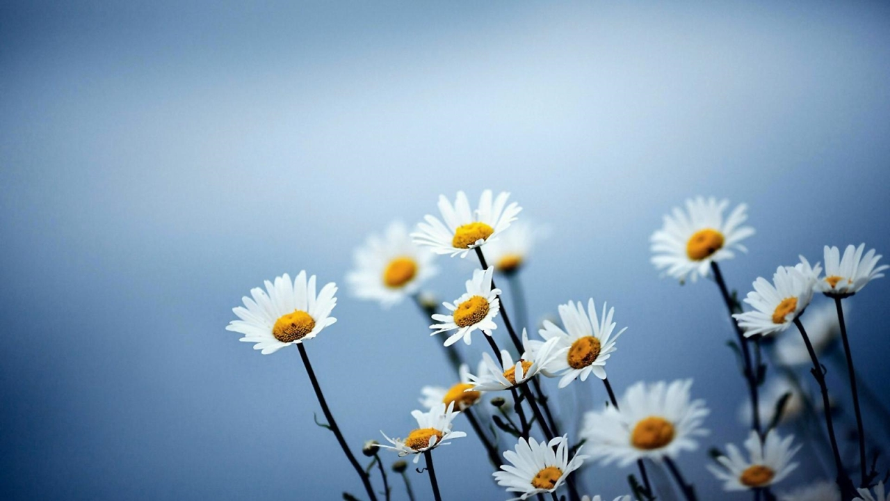 images-of-flowers-free-download-15