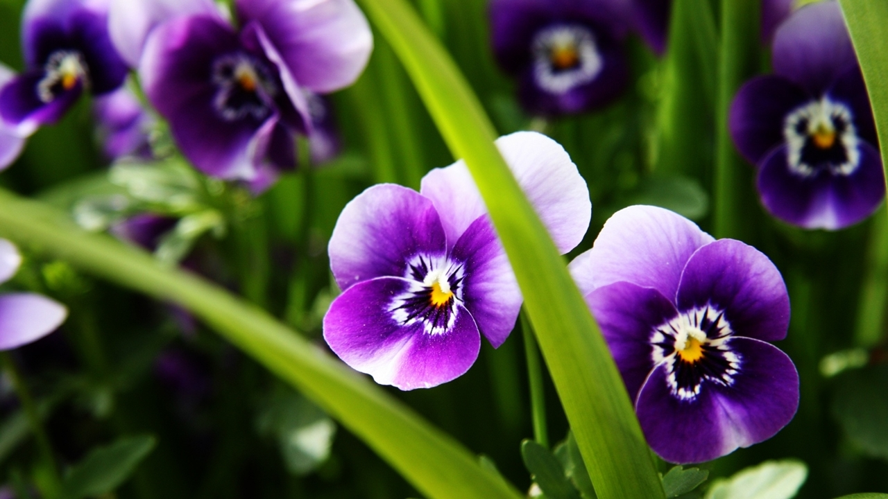 images-of-flowers-free-download-18
