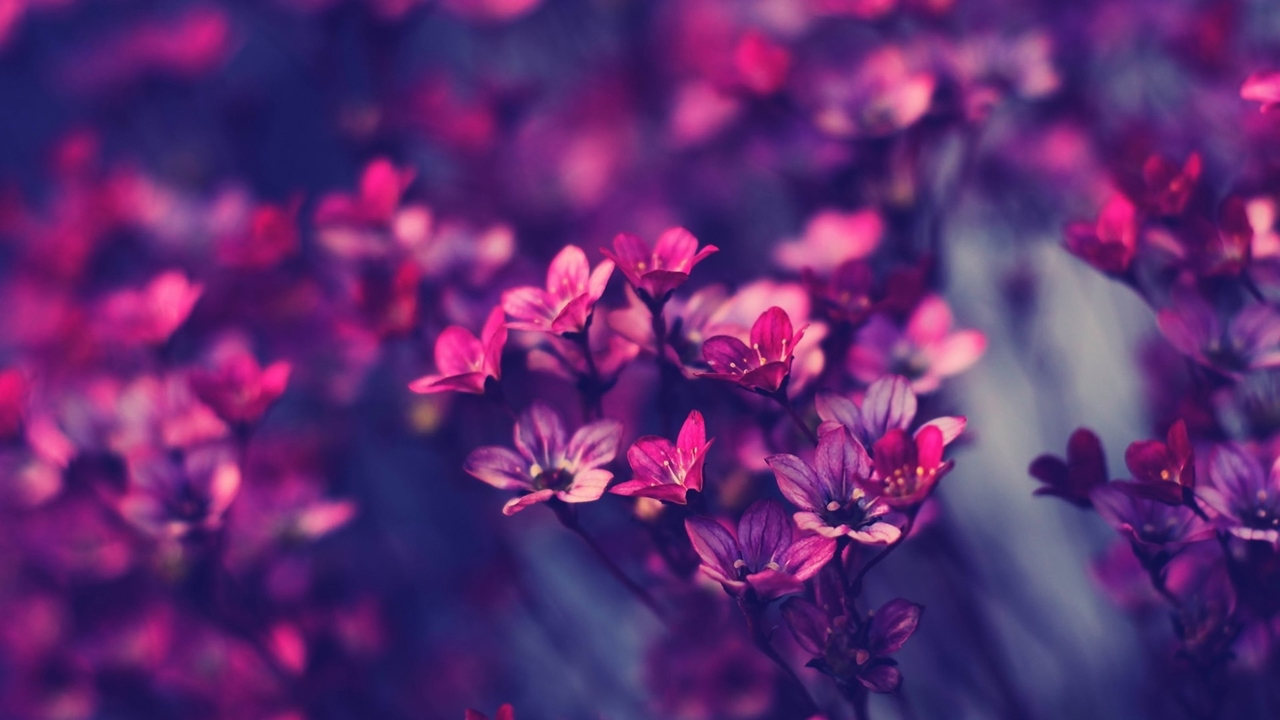 images-of-flowers-free-download-25