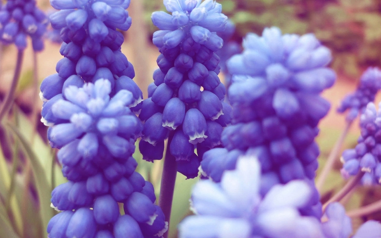 images-of-flowers-free-download-29