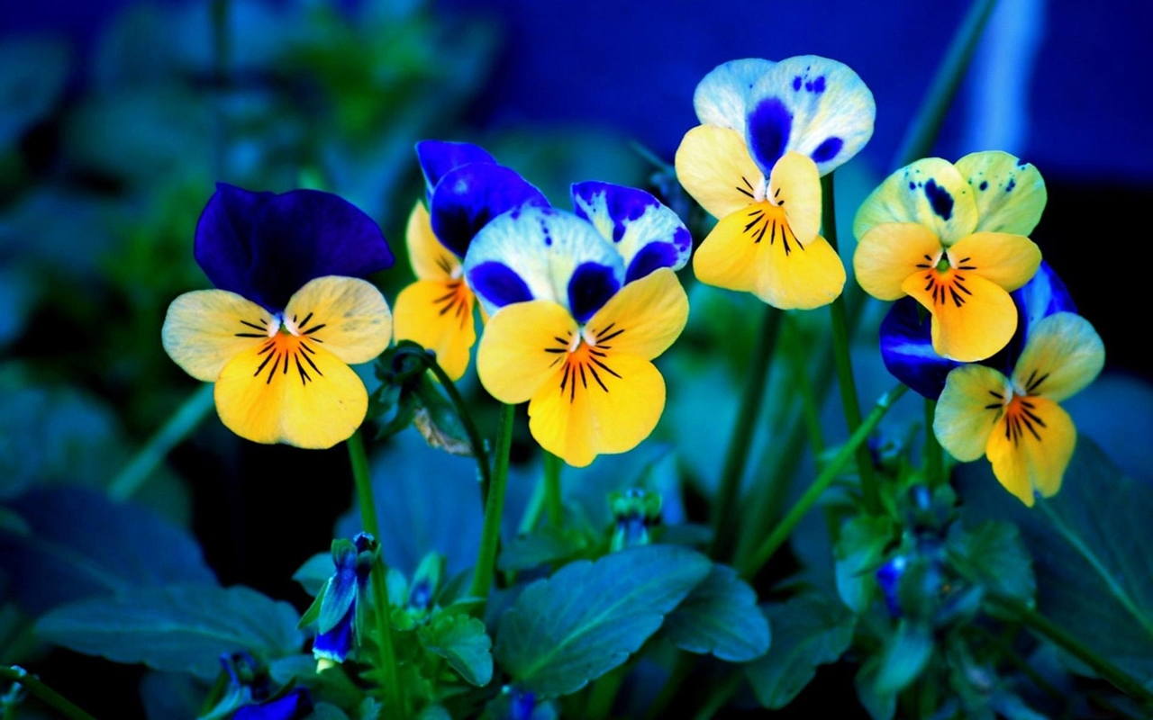 images-of-flowers-free-download-5
