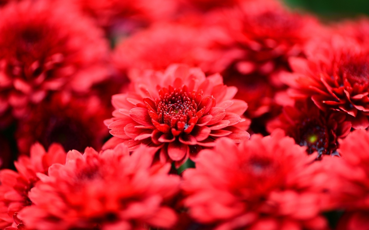 images-of-flowers-free-download-7