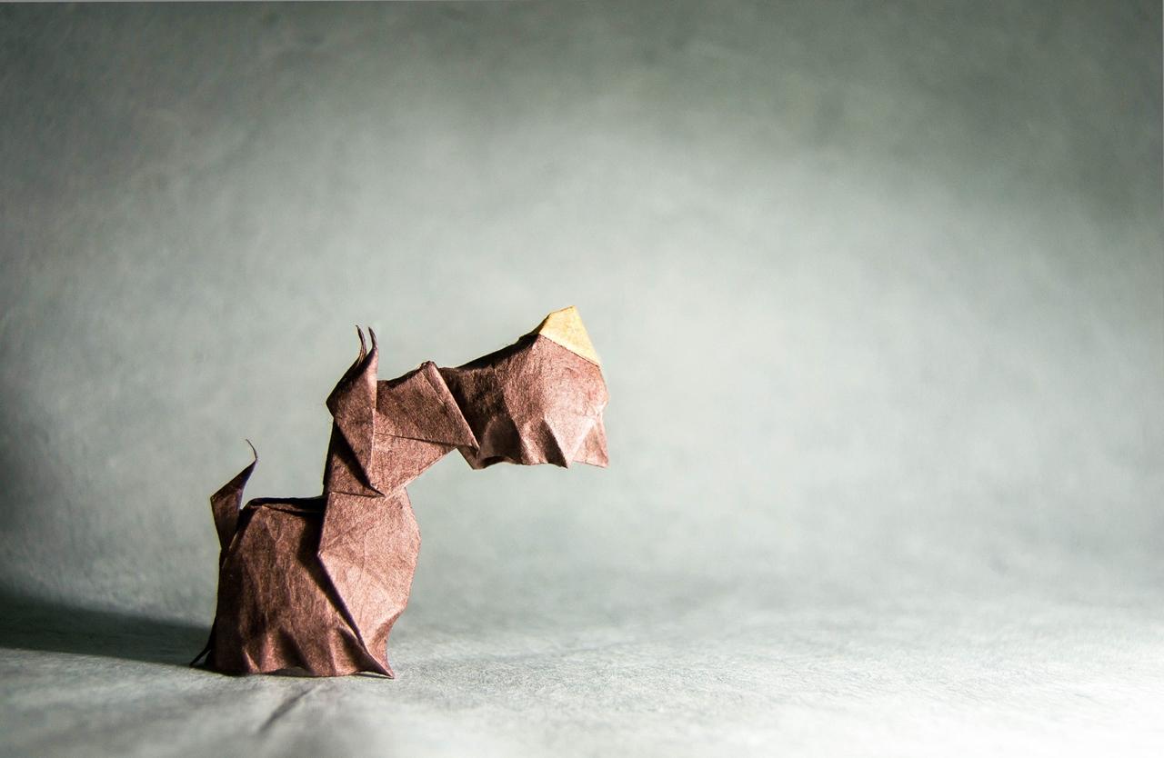 origami Gonzalo Calvo 17