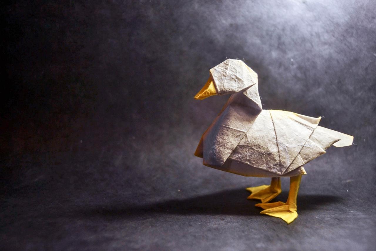 origami Gonzalo Calvo 18