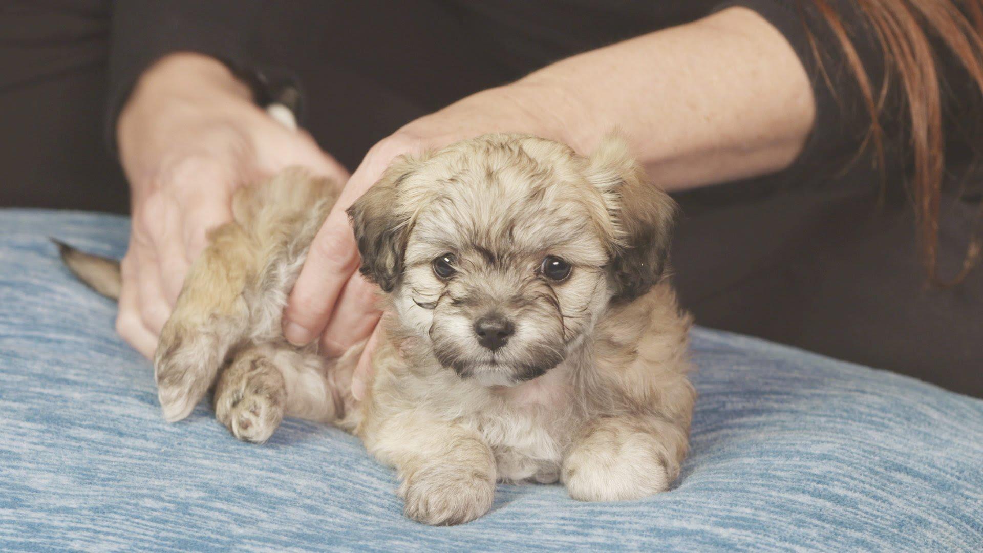 30-Minute Puppy Massage