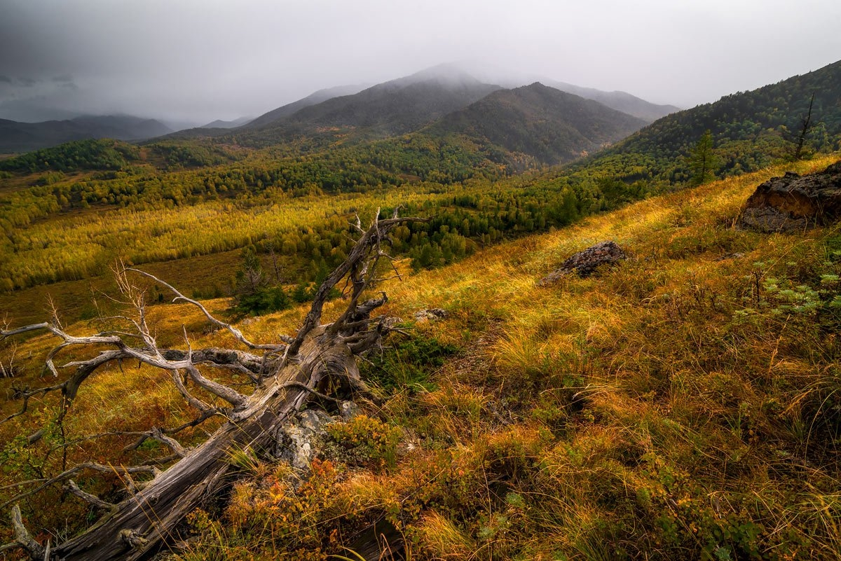 Amazing nature of the Altai territory in landscapes 05