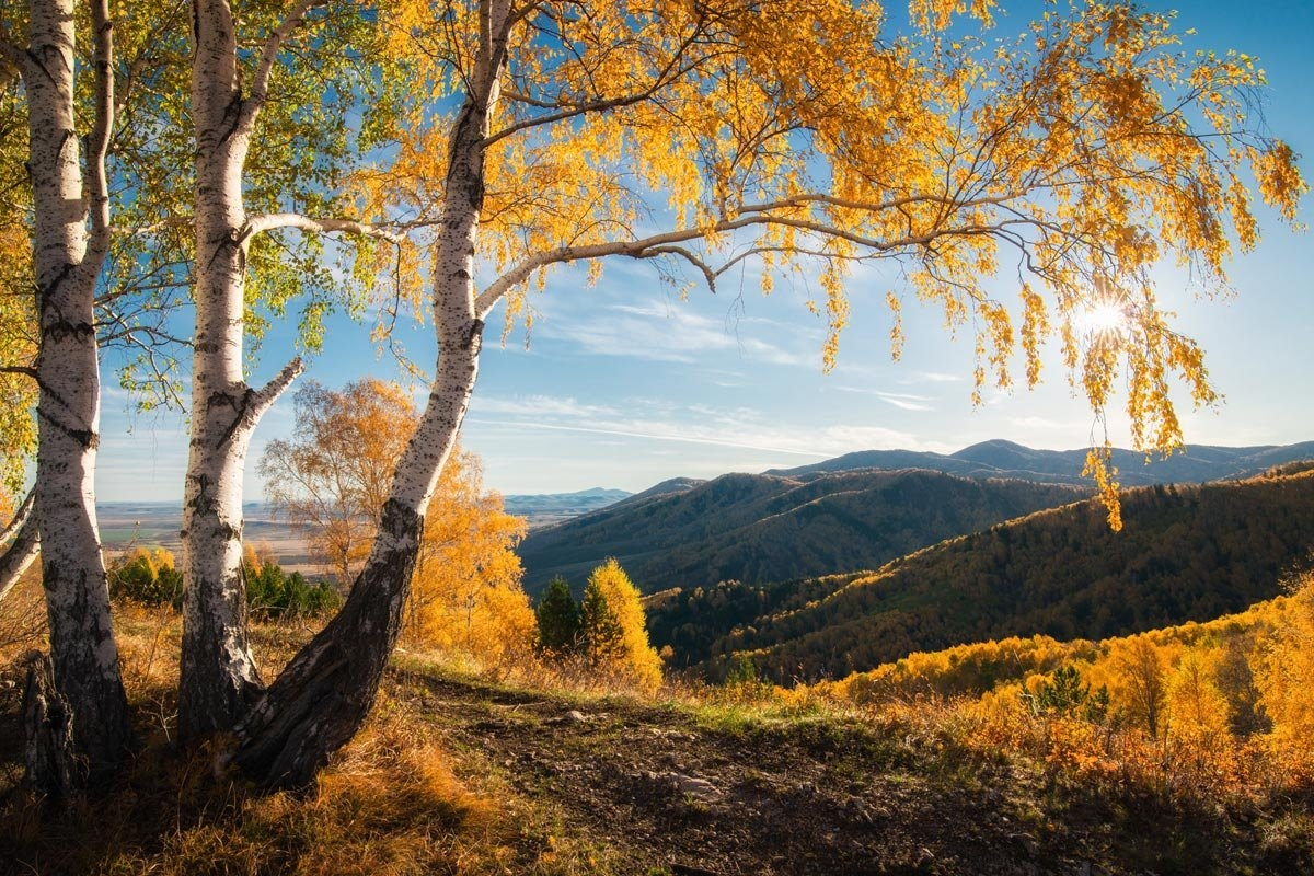 Amazing nature of the Altai territory in landscapes 11