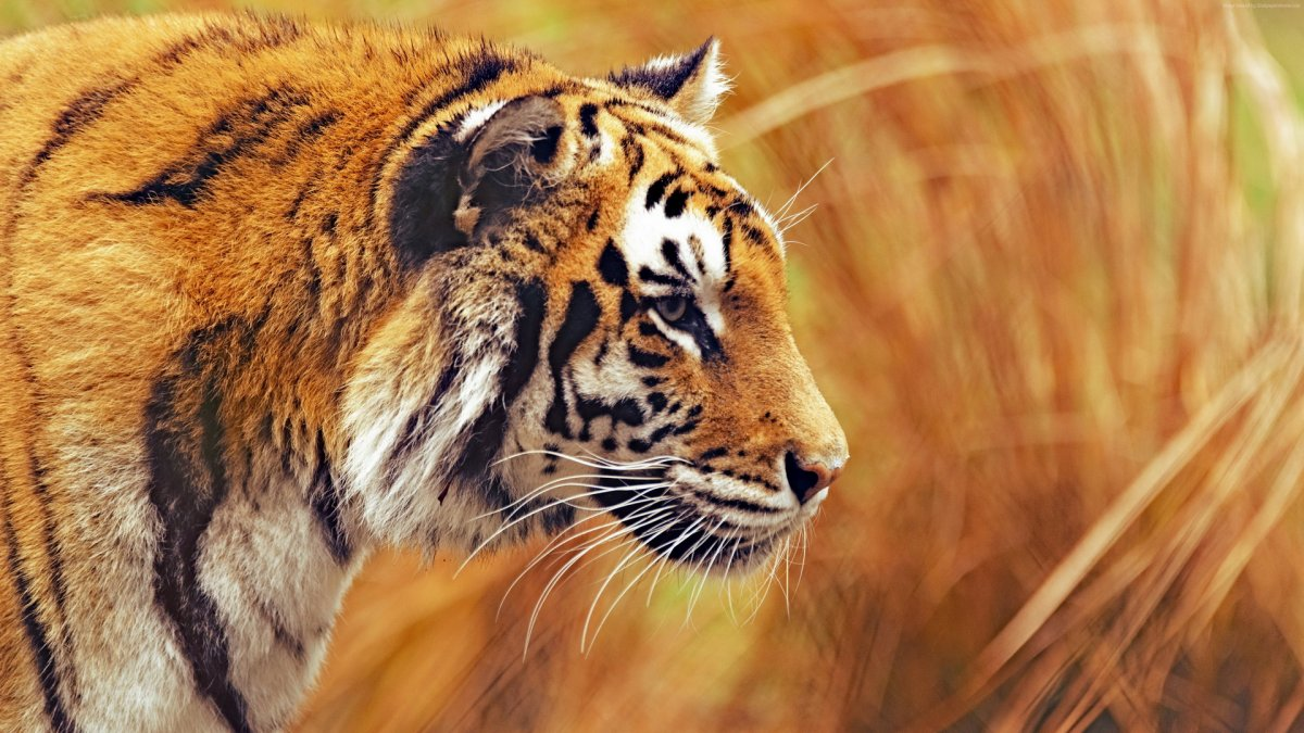 Beautiful animal pictures 17