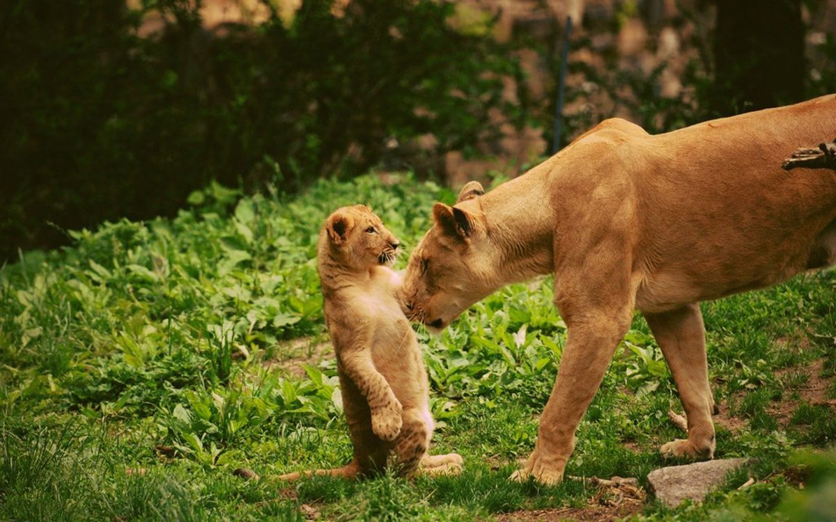 Beautiful animal pictures 22