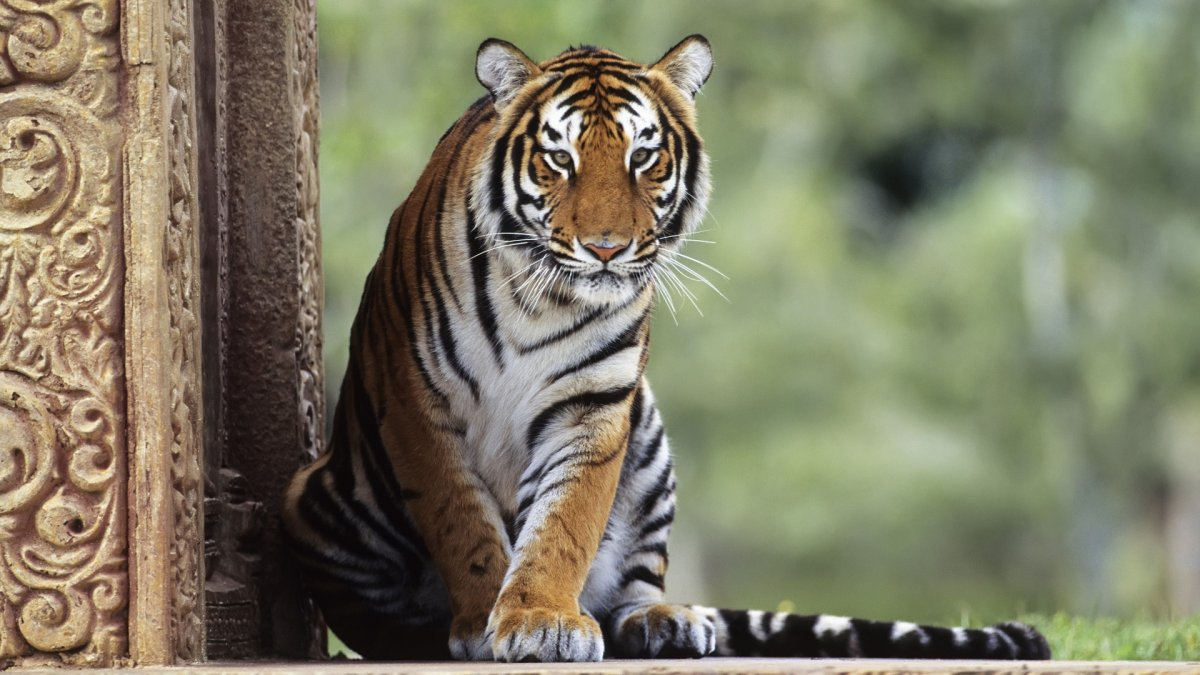 Beautiful animal pictures 23