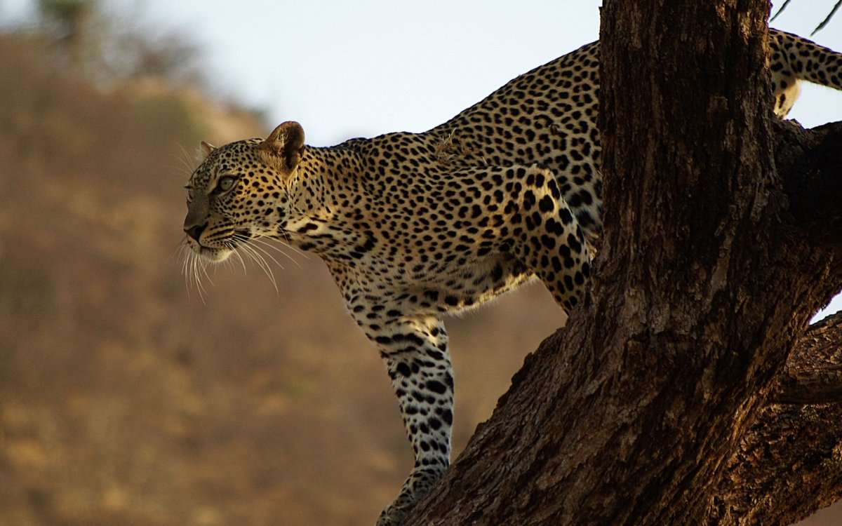 Beautiful animal pictures 26