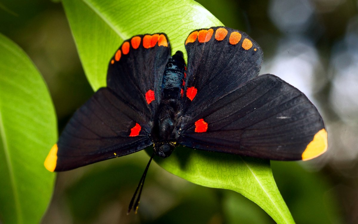 Beautiful pictures of butterflies 02
