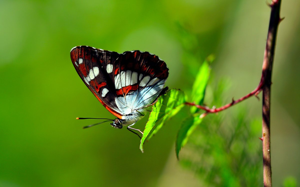 Beautiful pictures of butterflies 03