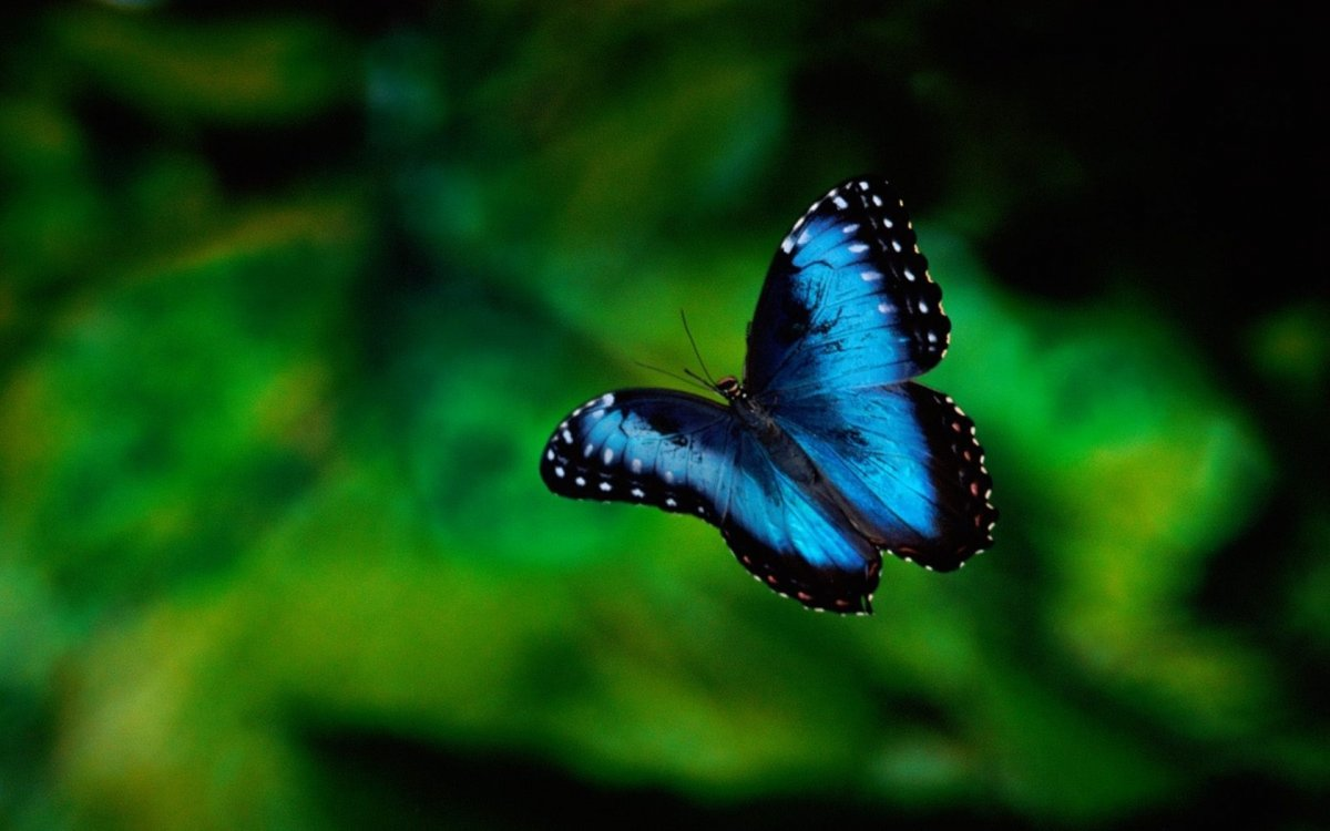 Beautiful pictures of butterflies 04