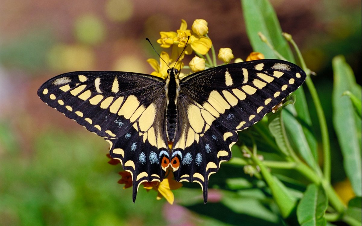 Beautiful pictures of butterflies 05