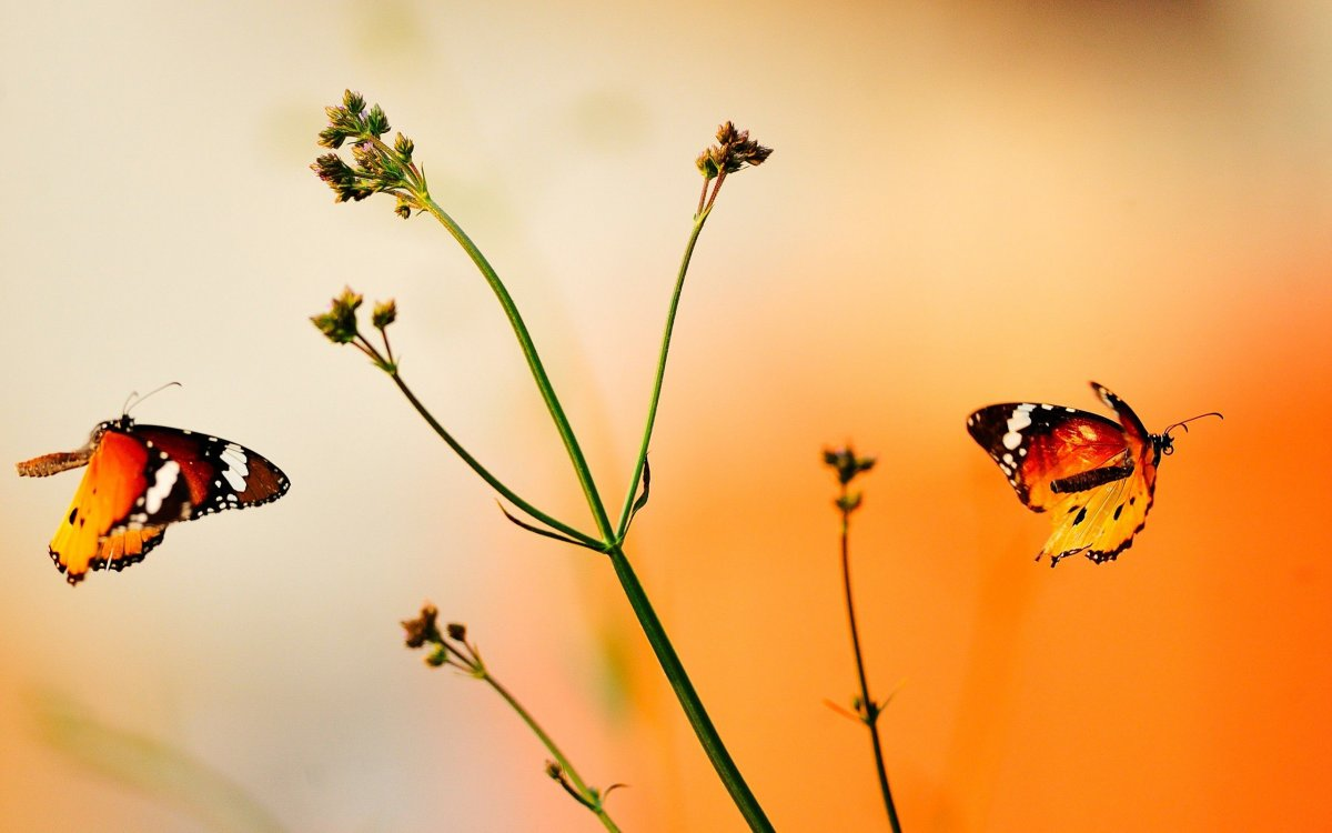 Beautiful pictures of butterflies 06