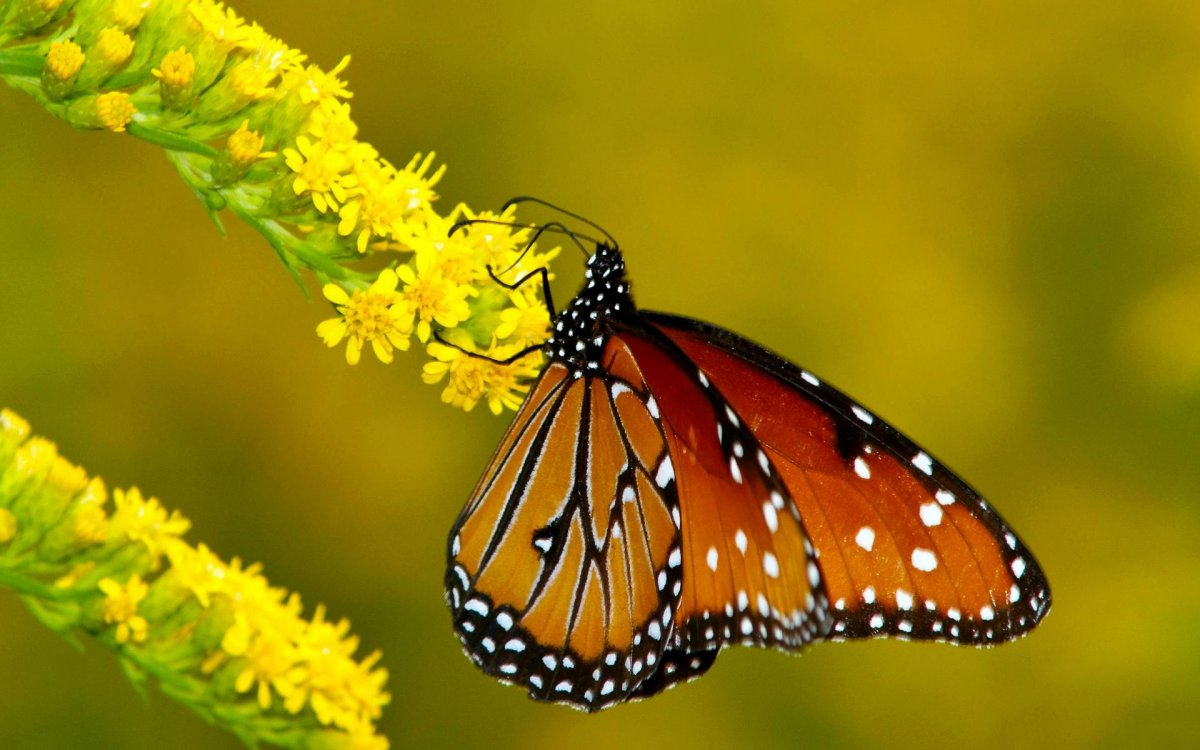 Beautiful pictures of butterflies 07