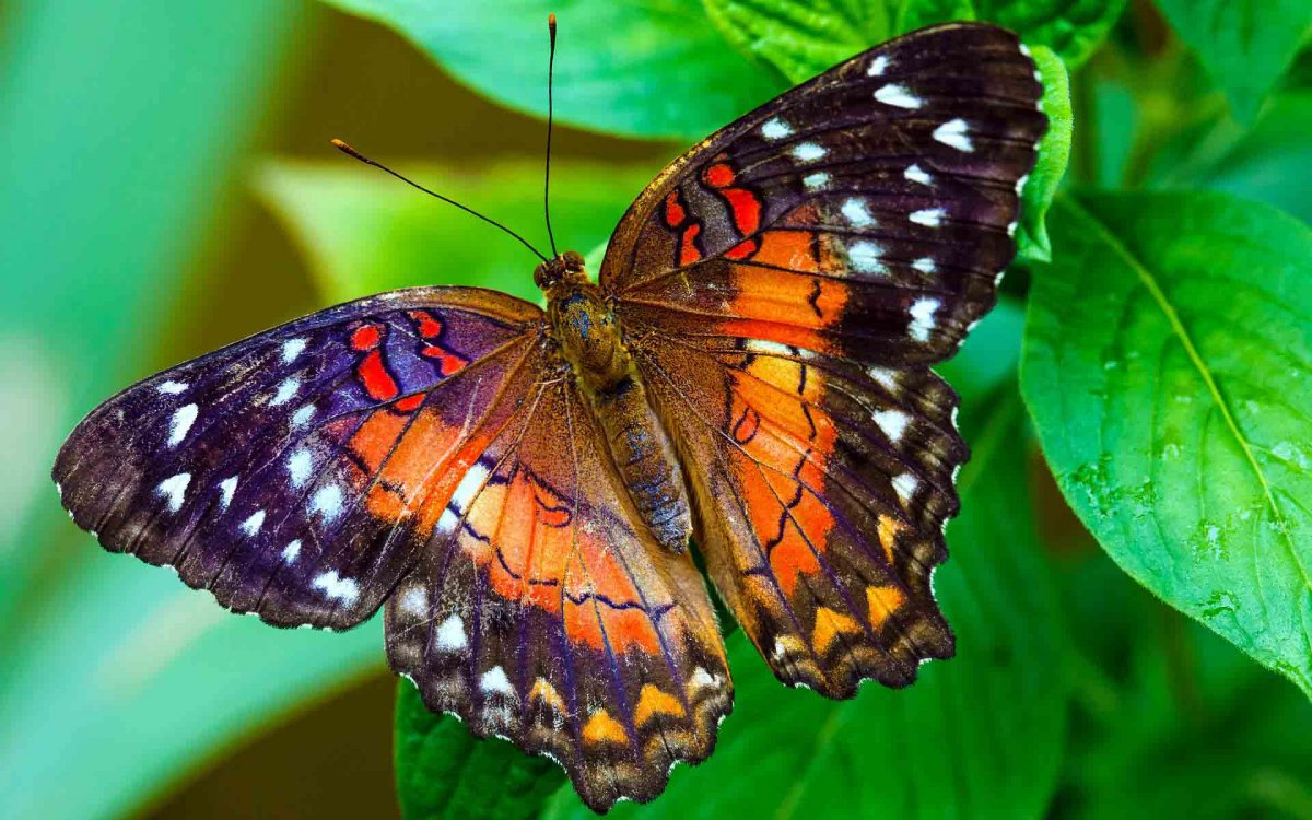 Beautiful pictures of butterflies 08