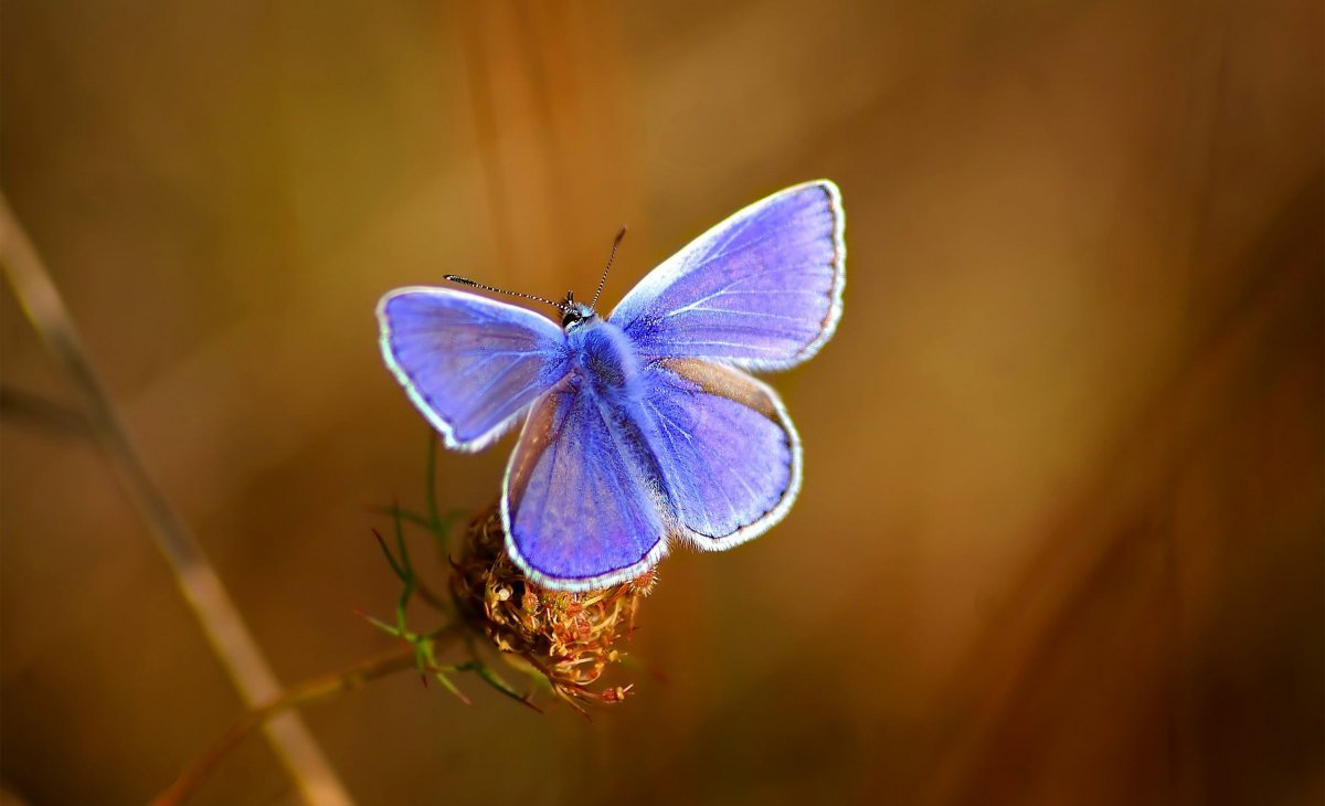 Beautiful pictures of butterflies 09