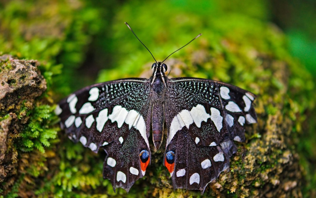 Beautiful pictures of butterflies 10