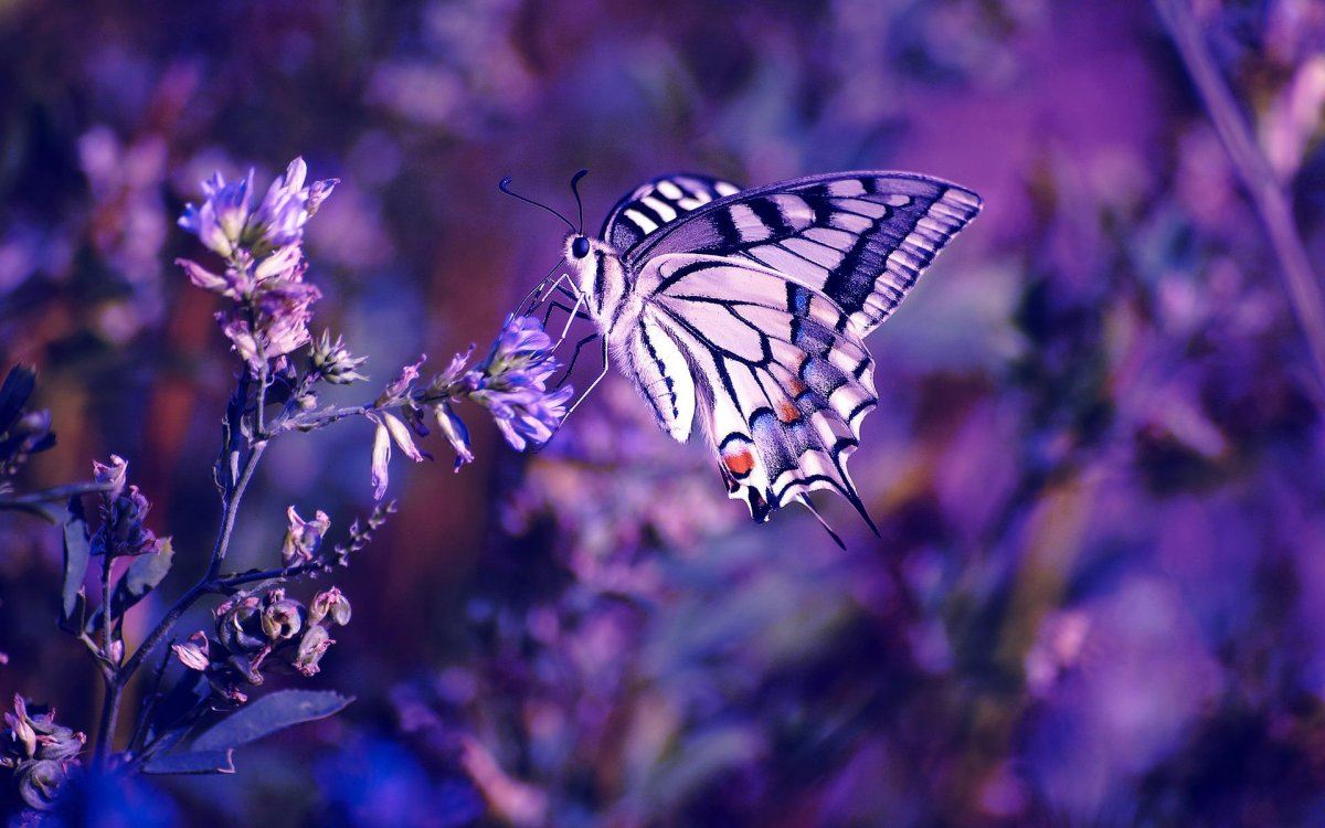 Beautiful pictures of butterflies 11