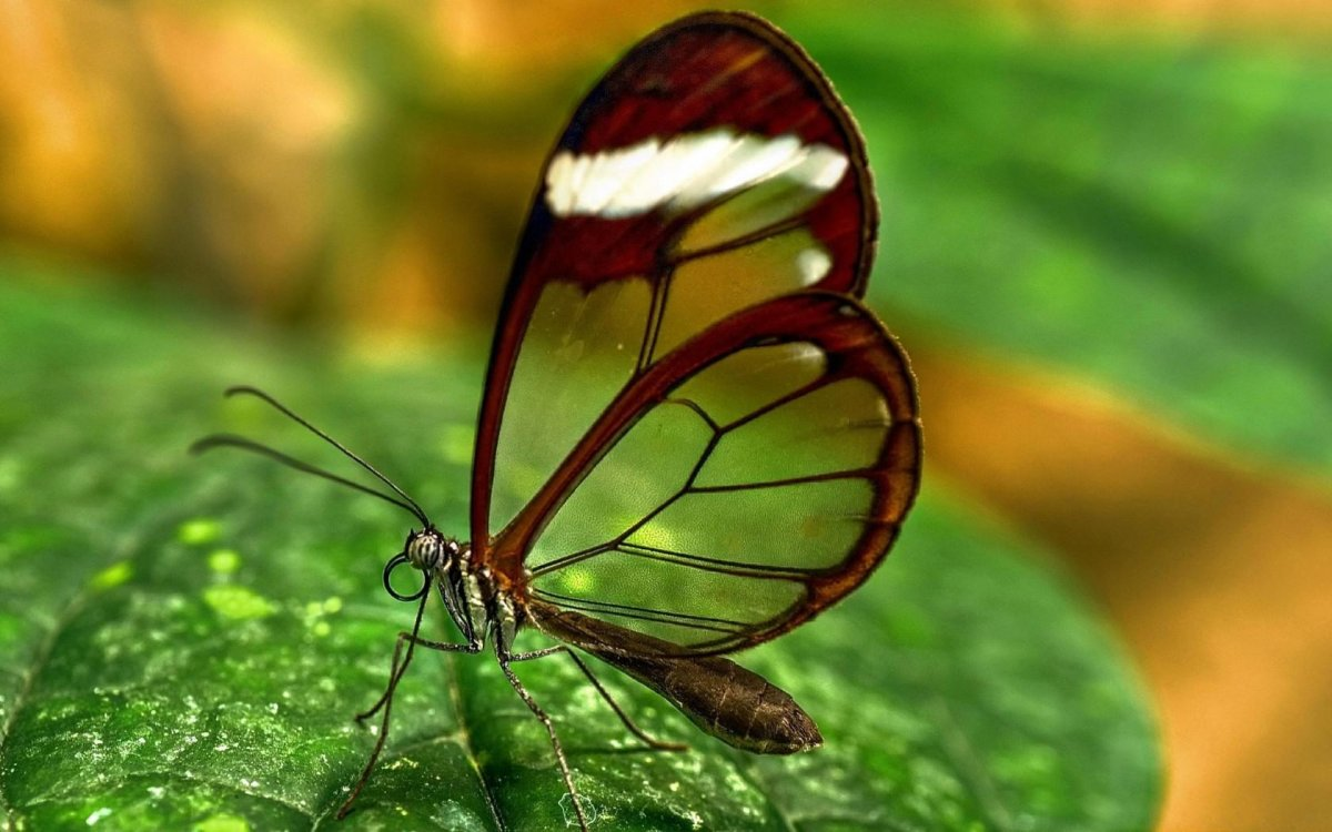 Beautiful pictures of butterflies 12