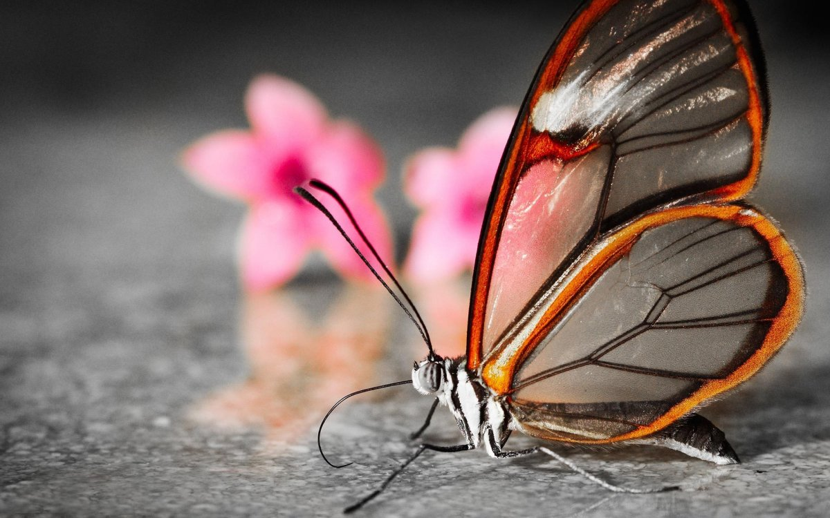 Beautiful pictures of butterflies 13
