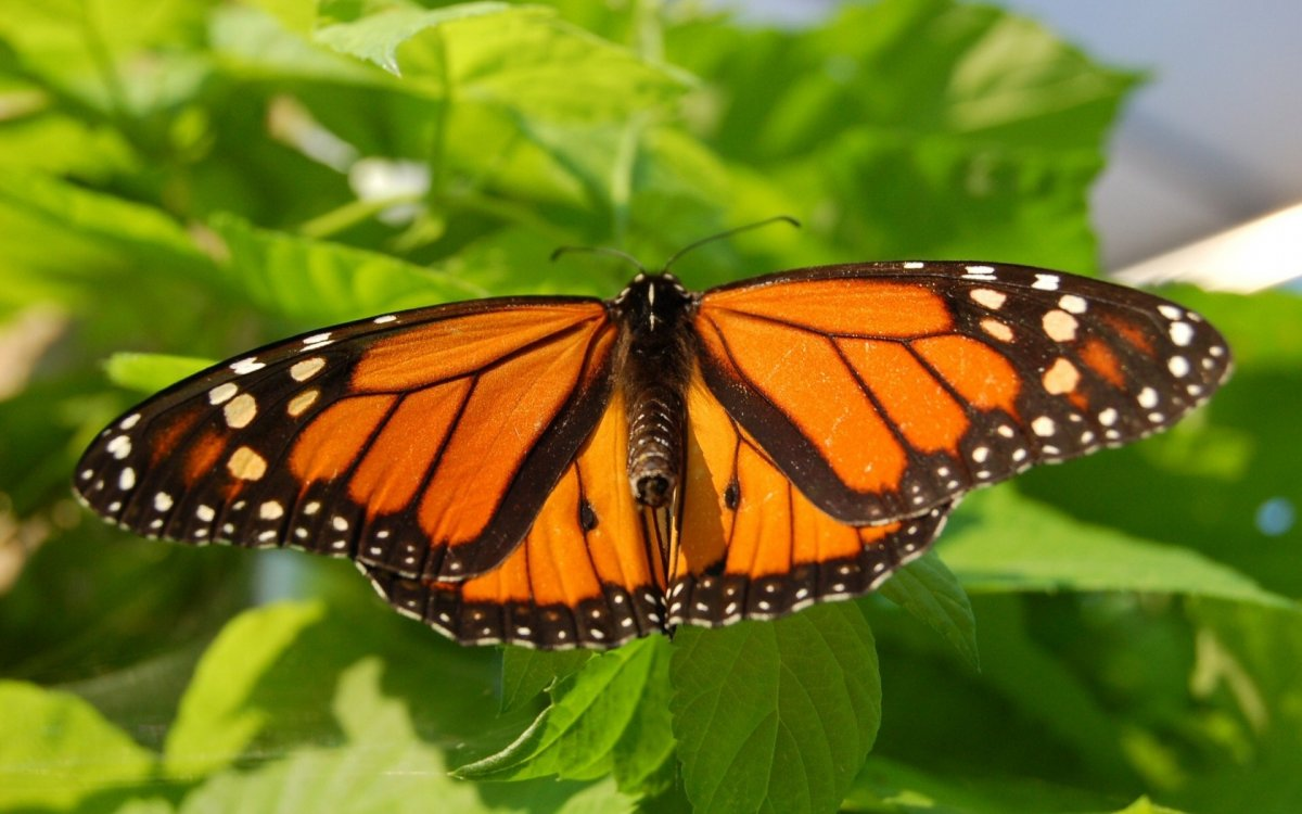 Beautiful pictures of butterflies 14
