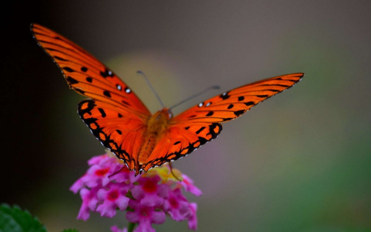 Beautiful pictures of butterflies 15