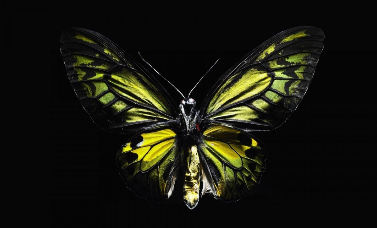 Beautiful pictures of butterflies 16