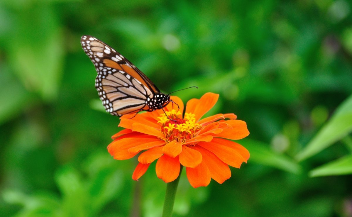 Beautiful pictures of butterflies 17