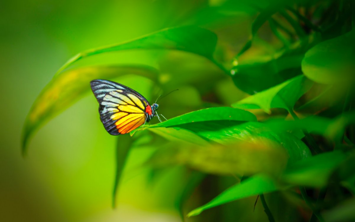 Beautiful pictures of butterflies 18