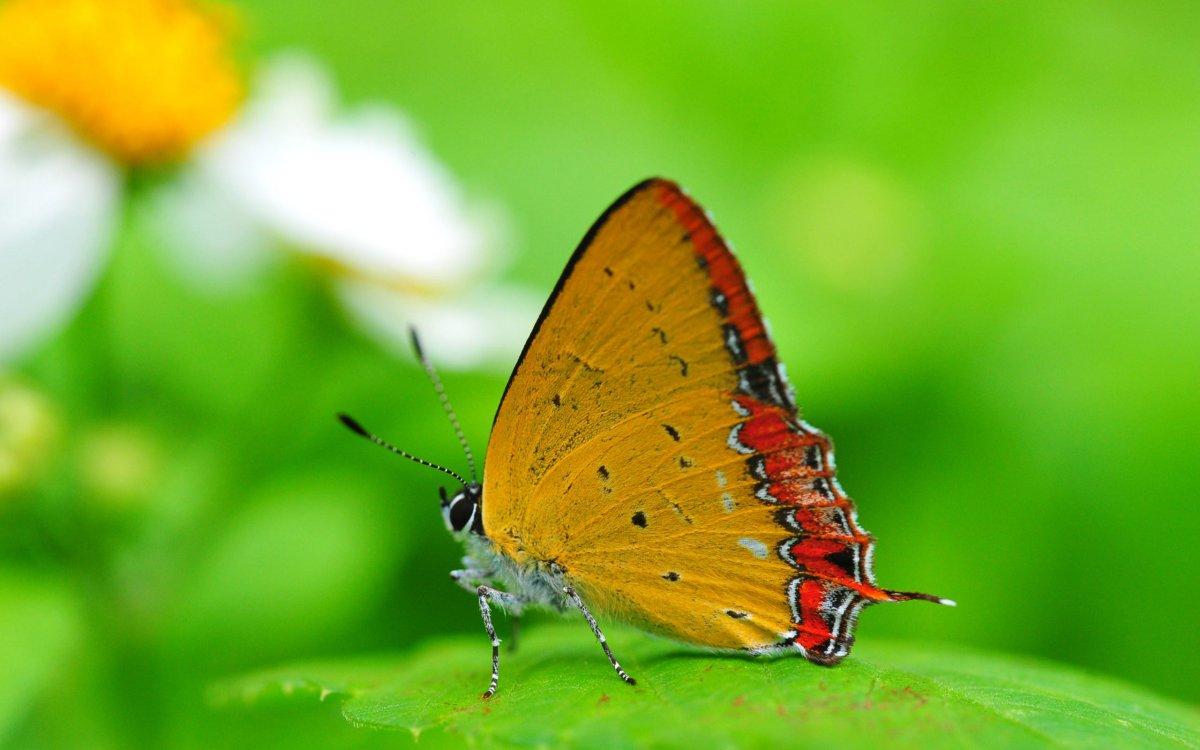 Beautiful pictures of butterflies 19