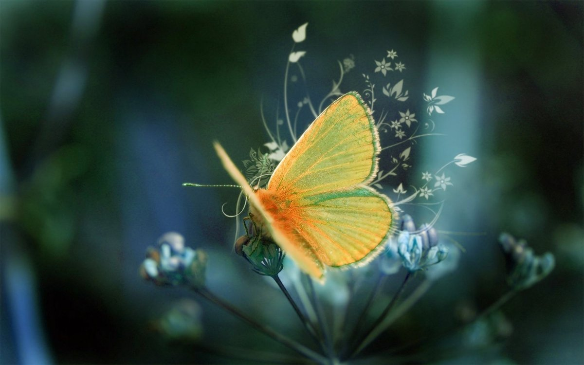 Beautiful pictures of butterflies 20