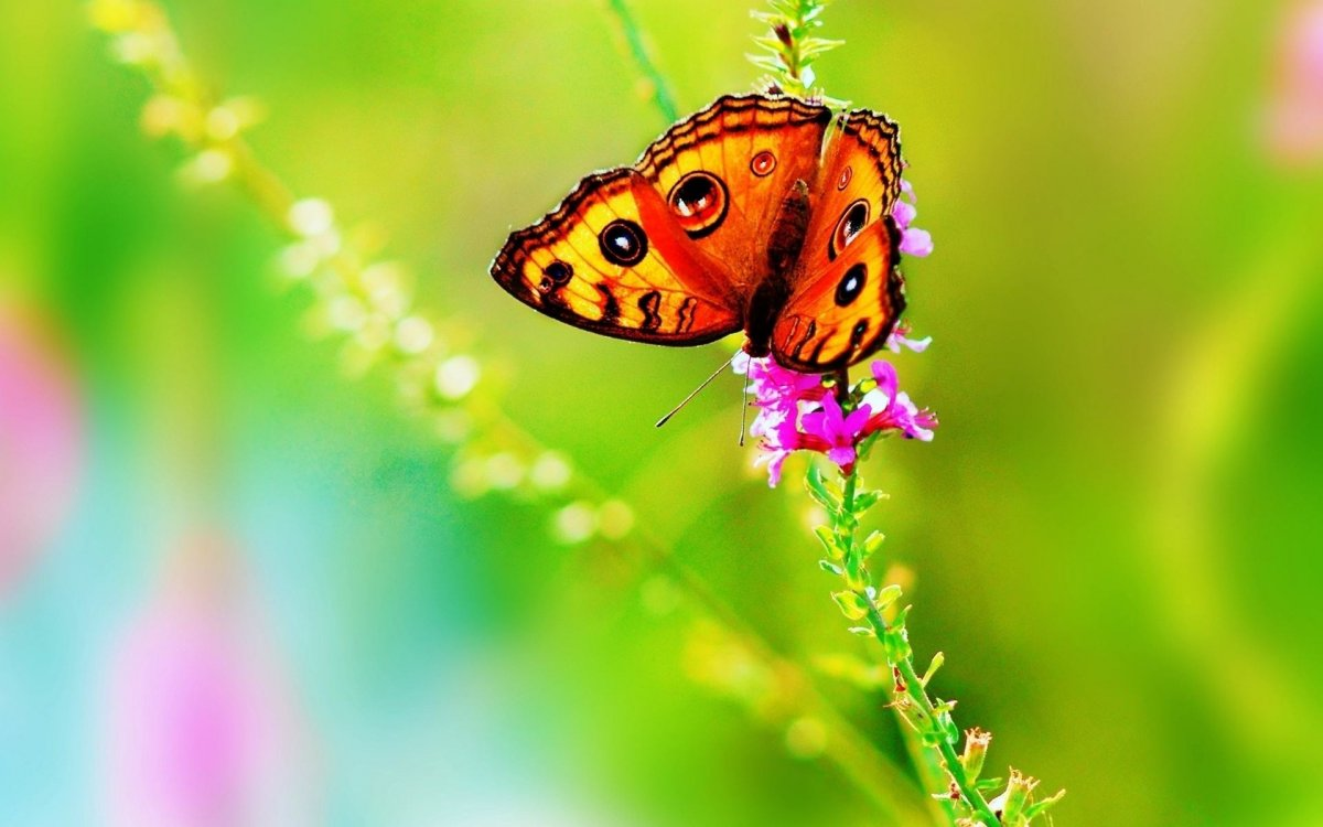 Beautiful pictures of butterflies 21