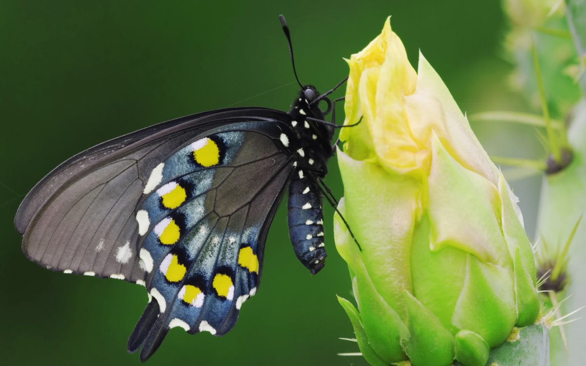 Beautiful pictures of butterflies 22