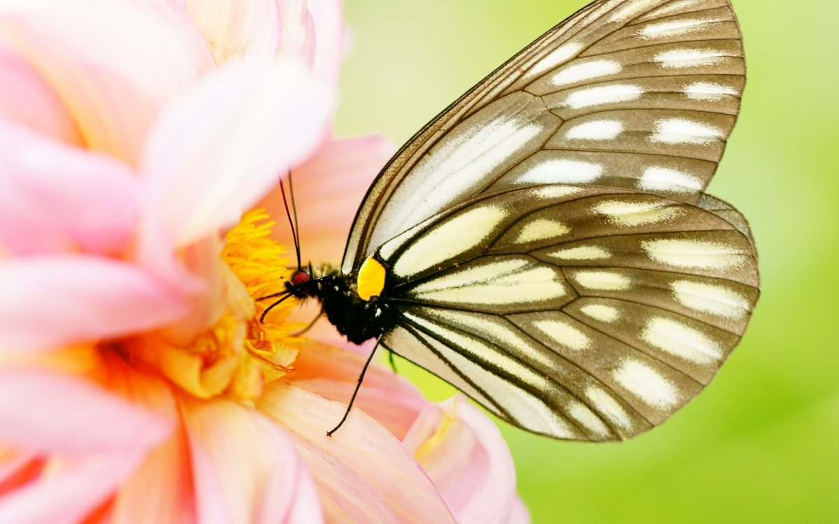 Beautiful pictures of butterflies 23