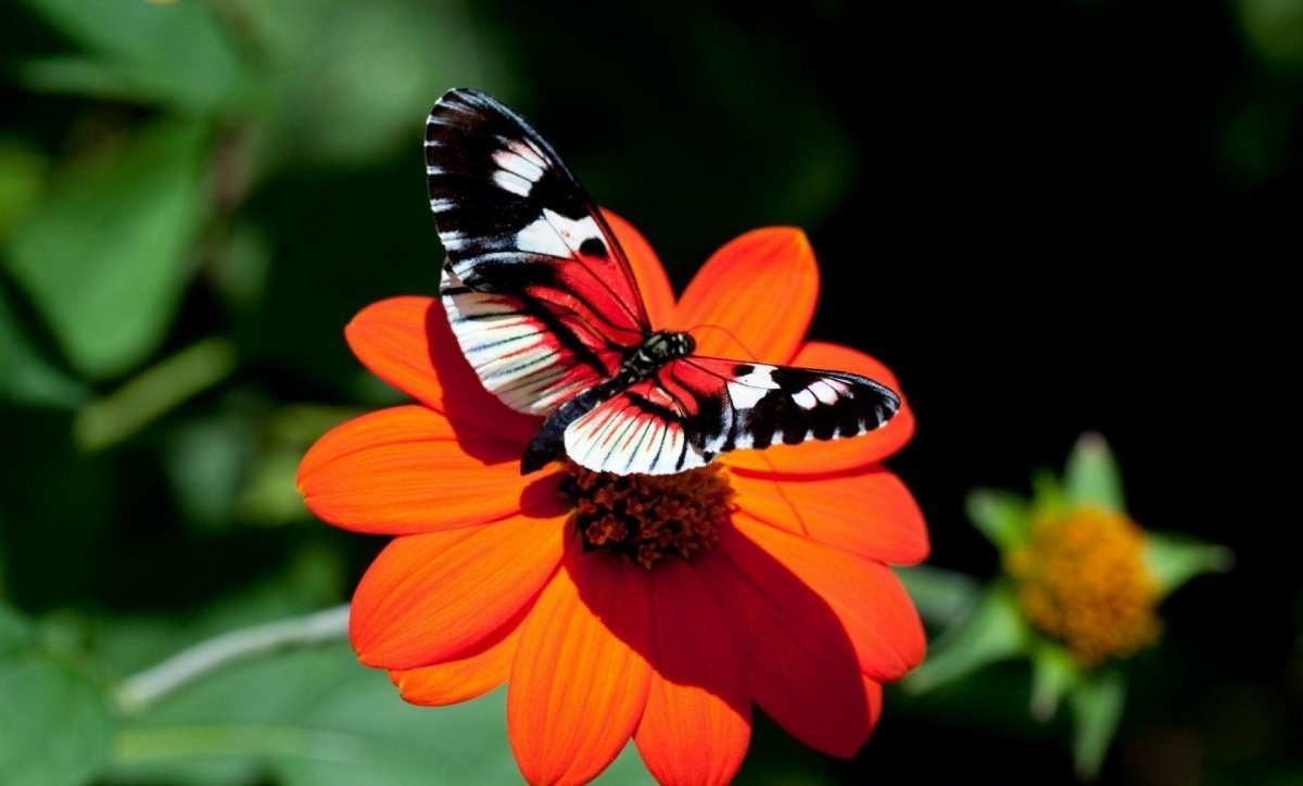 Beautiful pictures of butterflies 24