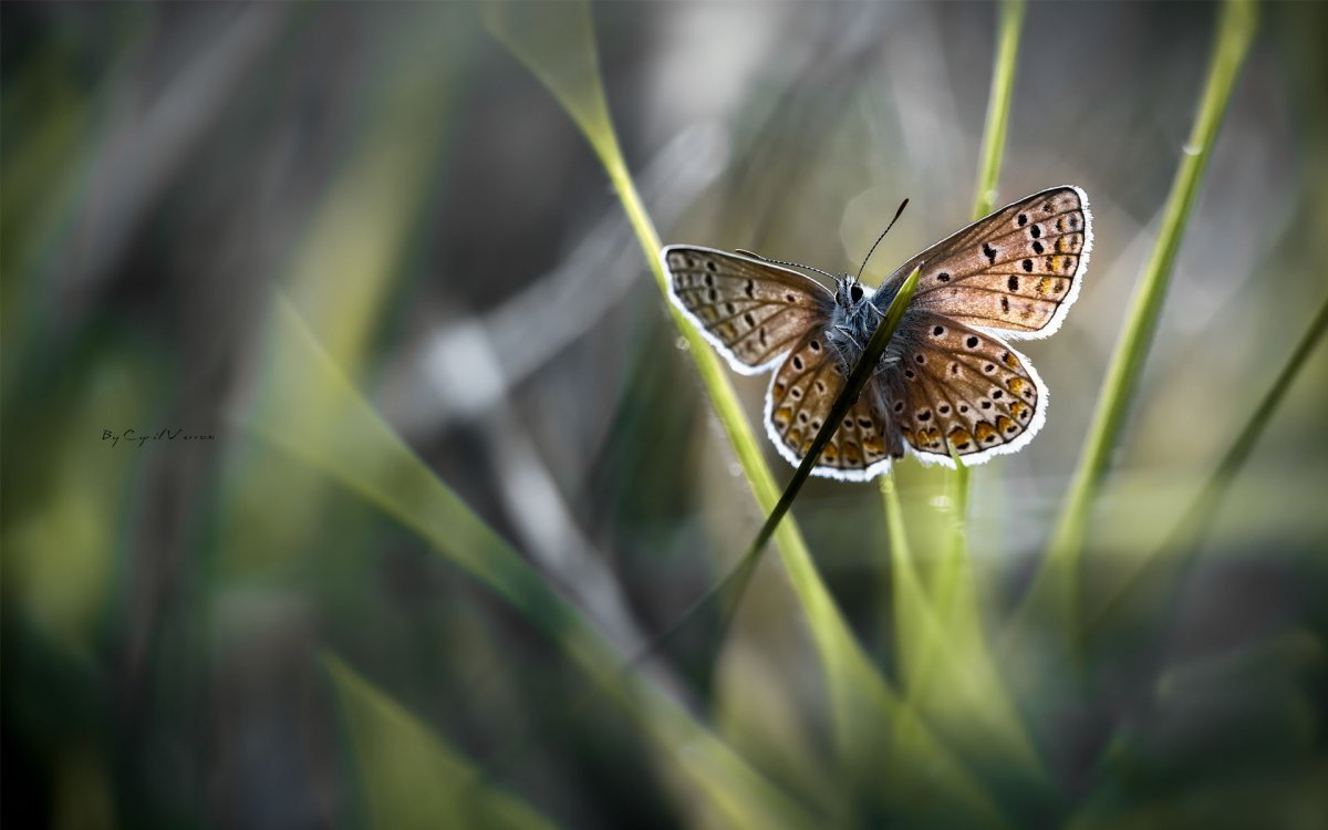 Beautiful pictures of butterflies 25