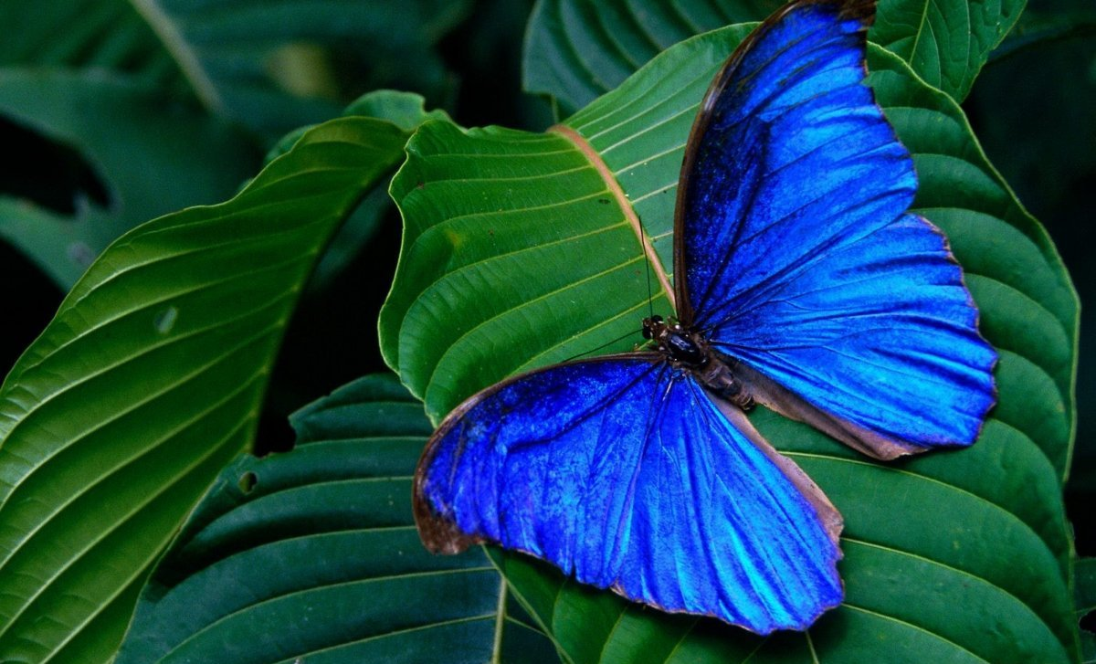 Beautiful pictures of butterflies 27