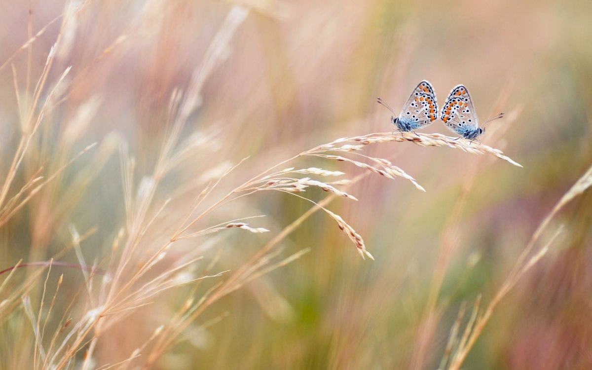 Beautiful pictures of butterflies 28