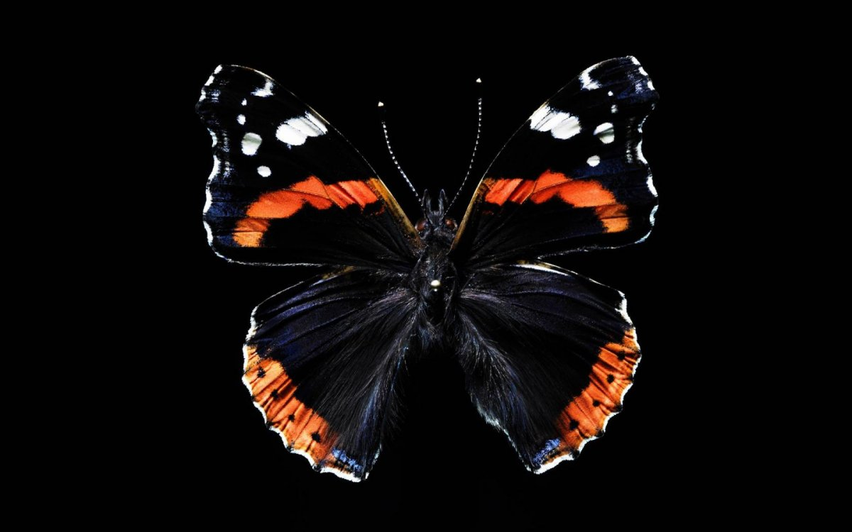 Beautiful pictures of butterflies 29