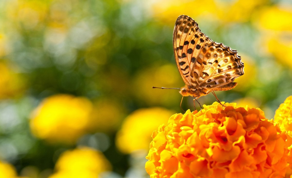 Beautiful pictures of butterflies 30